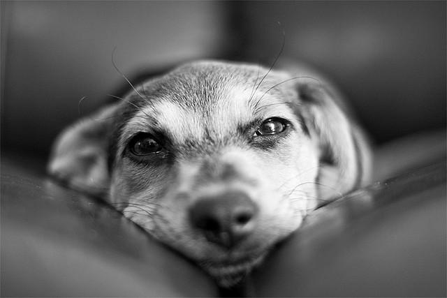 W świetle obowiązujących przepisów prawnych – całkowity zakaz – żadna firma wprowadzająca do obrotu na terenie Unii Europejskiej produkty kosmetyczne nie przeprowadza badań na zwierzętach